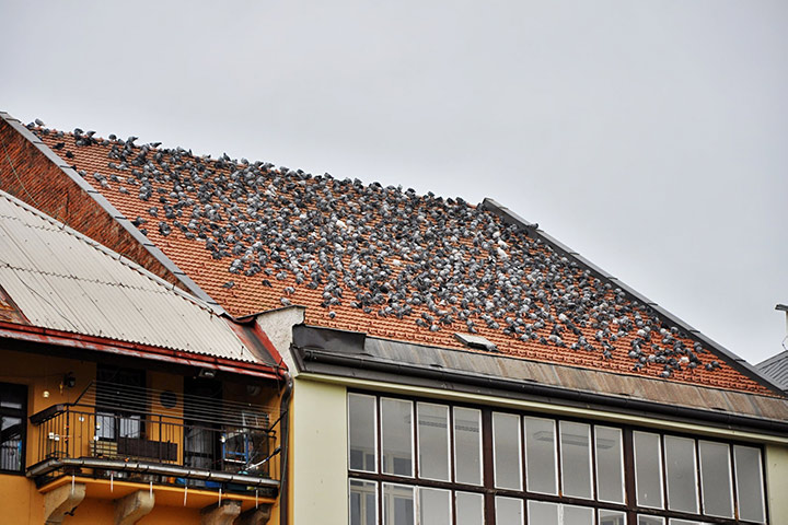 A2B Pest Control are able to install spikes to deter birds from roofs in Silvertown.