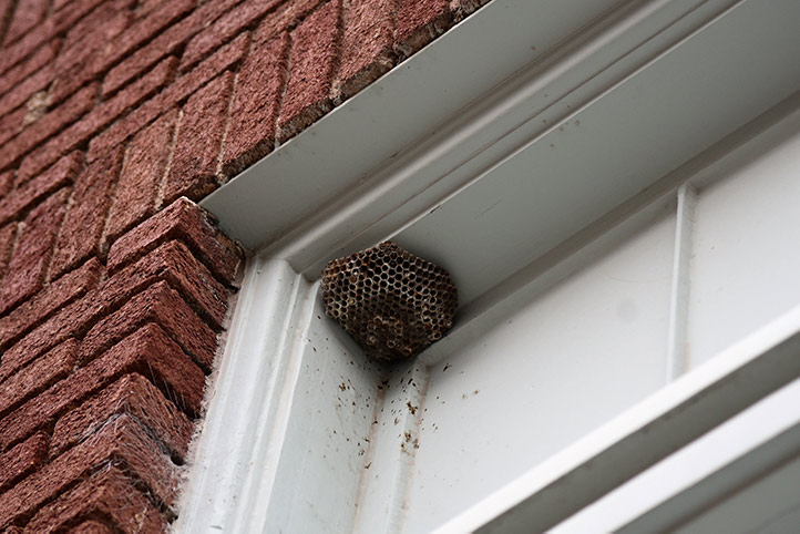 We provide a wasp nest removal service for domestic and commercial properties in Silvertown.